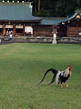 静岡県護国神社の雄鶏