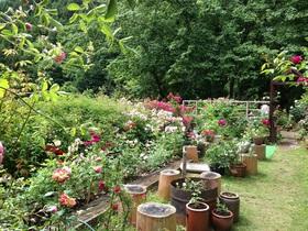 アトリエSAKIの庭(5月)